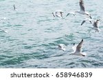 seagulls | Shutterstock . vector #658946839