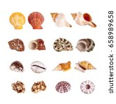 seashells isolated with paths | Shutterstock . vector #658989658