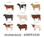 Cows Set  Hereford  Holstein ...