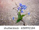 Blue Flower Growing Trough...