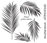 branch tropical palm areca... | Shutterstock .eps vector #659010160