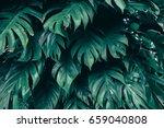 dark green tropical foliage ...   Shutterstock . vector #659040808