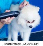 groomer haircut cute pomeranian ... | Shutterstock . vector #659048134