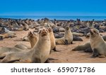 cape cross seal reserve in the... | Shutterstock . vector #659071786