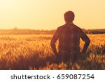 farmer in ripe wheat field... | Shutterstock . vector #659087254