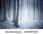 Winter Snow Storm In A Forest...