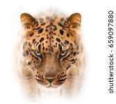 Small photo of far eastern leopard face isolated on white