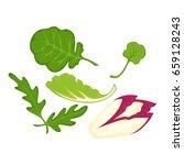 healthy organic salad leaves... | Shutterstock .eps vector #659128243