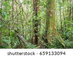 interior of pristine tropical... | Shutterstock . vector #659133094
