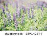 beauty flower. spring flower. | Shutterstock . vector #659142844