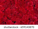Red Carnation Flowers...