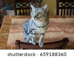 cat action close up | Shutterstock . vector #659188360