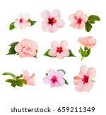 Tropical Flowers Set Fresh Pink - Fine Art prints