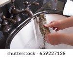 a hedgehog taking a bath in a... | Shutterstock . vector #659227138