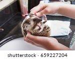 a hedgehog taking a bath ... | Shutterstock . vector #659227204