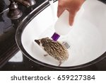 a hedgehog taking a bath in a... | Shutterstock . vector #659227384
