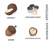 coconut  acorn  sunflower seeds ...   Shutterstock .eps vector #659270164