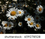 photo of chamomile wildflowers | Shutterstock . vector #659278528