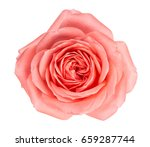 close up of fresh pink rose... | Shutterstock . vector #659287744