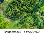 green forest  swamp and small...   Shutterstock . vector #659290960
