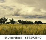 Golden Wheat Waves In The...