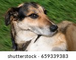 lying dog with a cunning ... | Shutterstock . vector #659339383