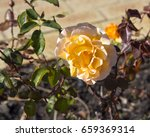 deliciously  spicy fragranced ... | Shutterstock . vector #659369314