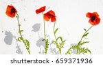 red poppies on a bleached wall... | Shutterstock . vector #659371936