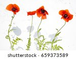 red poppies on a bleached wall... | Shutterstock . vector #659373589