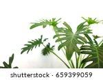 close up of green indoor plant... | Shutterstock . vector #659399059
