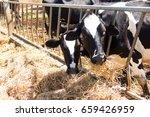 cow is feeding grass | Shutterstock . vector #659426959
