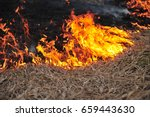 Fire  Burning Old Grass In The...