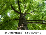 trees in the woods | Shutterstock . vector #659464948