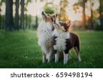 Stock photo two dogs shetland sheepdog sitting together puppy and adult dog family group of dogs of the same 659498194