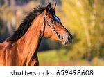 Small photo of Horse profile portrait. Side view