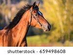 Stock photo horse profile portrait side view 659498608