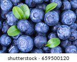 blueberry background. ripe and... | Shutterstock . vector #659500120