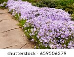 Perennial Ground Cover Bloomin...
