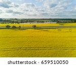 rapeseed field yellow green... | Shutterstock . vector #659510050