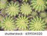cactus  cactus thorns  close up ... | Shutterstock . vector #659534320