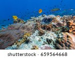 Butterfly Fish In The Coral...