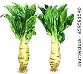 asparagus lettuce  celery ... | Shutterstock . vector #659581540