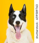 Stock photo adorable rescue dog with two differently colored eyes at an adoption center with a bright sunny 659589763