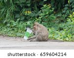 mother monkey and monkey are... | Shutterstock . vector #659604214