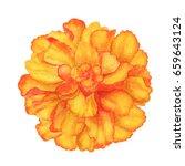 Watercolor Marigold Flower...
