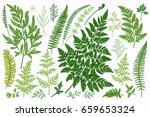 set with leaves. ferns.  vector ... | Shutterstock .eps vector #659653324