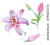 wildflower lily flower in a... | Shutterstock . vector #659665276