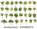 isolated tree on white... | Shutterstock . vector #659684074