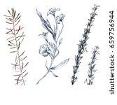 wilds grass and flowers pencils ... | Shutterstock . vector #659756944