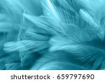 blue chicken feathers in soft... | Shutterstock . vector #659797690